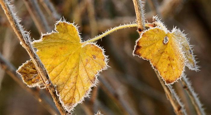 Detoxikácia tela na jeseň má priaznivý vplyv na vaše obličky i črevá.