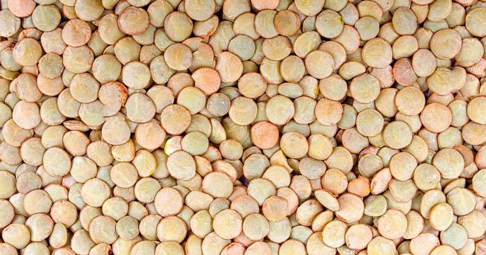 Medzi strukoviny radíme aj šošovicu. Je bohatá na bielkoviny, ale aj minerálne látky.