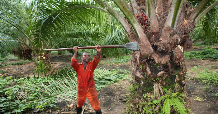 Nielenže má palmový olej negatívny dopad na naše zdravie, ale aj životné prostredie.