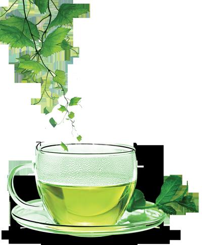 Pitie zeleného čaju je jedným zo spôsobov ako zrýchliť metabolizmus a jeho činnosť.