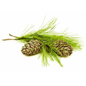 Cédrový olej sa vyrába zo 4 hlavných druhov dreva.