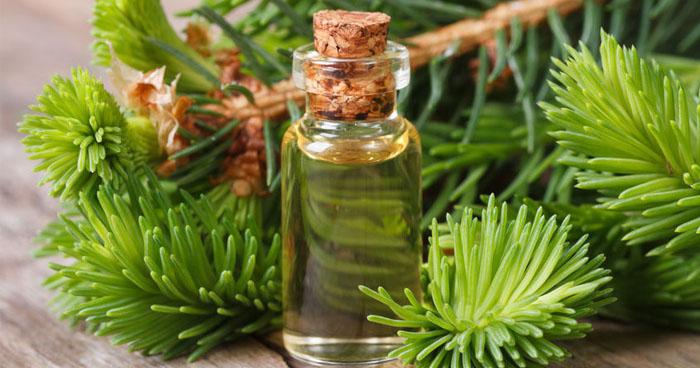 Zázračný olej z cédrového dreva a sibíru pomáha proti mnohým neduhom.